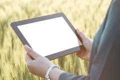 Бизнес-леди используя цифровую таблетку в поле Стоковое Фото