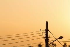 биографической вечер Заход солнца электрический полюс стоковые изображения