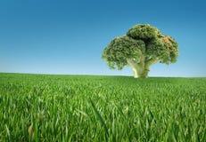 биологическая еда Стоковые Изображения