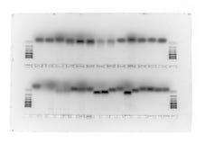 биологический гель Стоковые Фотографии RF