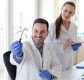 Биологи анализируя рост ростка стоковая фотография