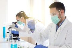 Биологи анализируя рост ростка стоковое изображение