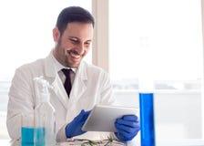 Биолог анализируя испытания по планшет в лаборатории стоковые изображения