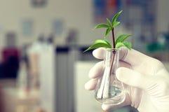 биотехнология Стоковое Изображение RF