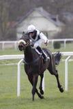 био грандиозное prix prague picca лошади Стоковое Изображение