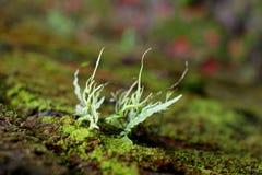 Биология зеленого растения Стоковое Изображение