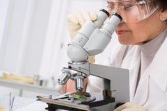 Биолог смотря через микроскоп Стоковая Фотография RF