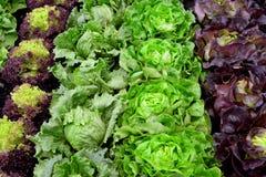 БИО свежий салат на саде Стоковое Изображение RF