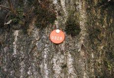 Бирка дерева Стоковые Изображения RF