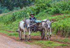Бирманская тележка вола катания фермера Стоковое Фото