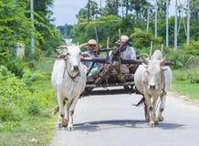 Бирманская тележка вола катания фермера Стоковая Фотография RF