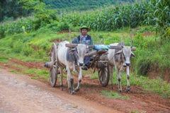Бирманская тележка вола катания фермера Стоковые Фото