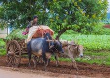 Бирманская тележка вола катания фермера Стоковое Изображение RF