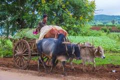Бирманская тележка вола катания фермера Стоковые Изображения