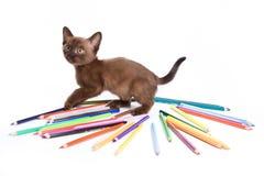 бирманский котенок стоковое фото rf