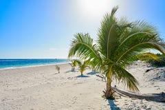 Бирюза Мексика пляжа Майя Ривьеры карибская стоковые фото