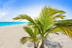 Бирюза Мексика пляжа Майя Ривьеры карибская стоковая фотография