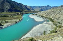 Бирюза Katun в осени, горе Altai стоковые фотографии rf