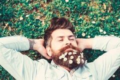 Битник на мирной стороне кладет на траву, взгляд сверху Гай смотрит славно с цветками маргаритки или стоцвета в бороде 308 латунн стоковые фотографии rf
