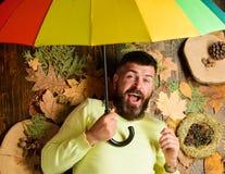 Битник с усиком бороды предпологает что ненастный зонтик владением погоды наслаждается сезоном Положение человека бородатое на де стоковые изображения rf