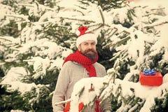 Битник santa на рождественской елке в снежном лесе зимы стоковые изображения rf