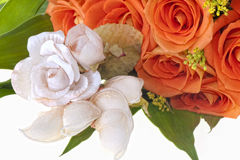 благоволит к померанцовым розам полоть Стоковое Изображение