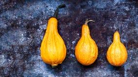 благодарение предпосылки счастливое 3 оранжевых тыквы на деревенской предпосылке металла с космосом экземпляра Сбор осени Стоковое фото RF