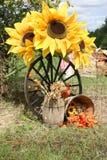 благодарение солнцецвета дисплея Стоковые Фотографии RF