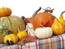 благодарение тыкв gourds Стоковое Фото