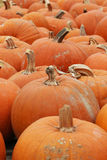 Благодарение Halloween тыквы Стоковая Фотография RF