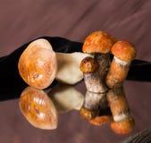 Благородные грибы стоковое фото