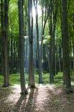 благословленный свет пущи Стоковая Фотография