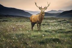 Благоустраивайте взгляд вдоль полей сельской местности к туманному Snowdonia Стоковые Изображения