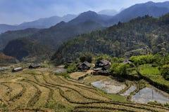 Благоустраивайте взгляд полей риса Sapa окруженных горами, Вьетнам Стоковое Изображение