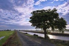 Благоустраивайте взгляд рисовых полей, дороги, дерева, реки, голубого неба и драматических облаков стоковые фотографии rf