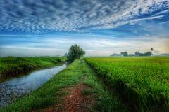 Благоустраивайте взгляд рисовых полей, реку с драматическим голубым небом стоковые фото