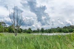 Благоустраивайте около фретки крышки, залива Arcachon, Франции стоковое изображение
