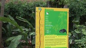 Благоустраивать около музея Inti-Nan сток-видео