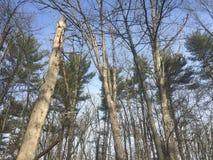 Блаженное небо pennsylvanian стоковая фотография rf