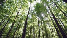 Блески солнца через деревья сток-видео