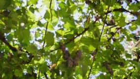 Блески солнца через деревья акции видеоматериалы
