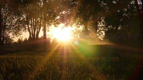 Блеск Солнця через зеленую листву и завивая дым акции видеоматериалы