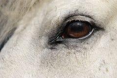 близкая головная лошадь вверх Стоковое Изображение RF