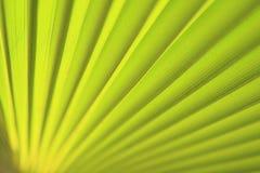 близкая зеленая ладонь листьев вверх Стоковое фото RF