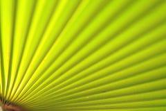 близкая зеленая ладонь листьев вверх Стоковые Фото