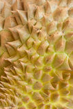 близкая кожа durian вверх Стоковое Изображение RF