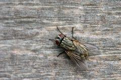 близкая муха вверх Стоковая Фотография RF