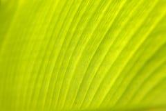 близкая пальма листьев вверх Стоковые Изображения