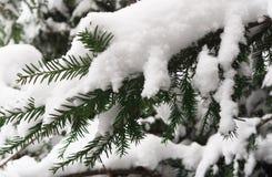Близкая поднимающая вверх съемка завтрак-обедов ели под снегом стоковое изображение