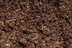 близкая почва вверх Стоковое Фото